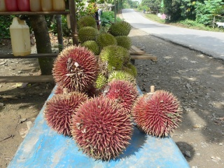 This, to me, is a very rare encounter - with a RED DURIAN !! My childhood hometown of Segamat, is famous all over Malaysia for such fruit, but I've never heard or seen a Red durian before (like many of you, I presume). Here it is, by a roadside stall somewhere in S. Kalimantan.