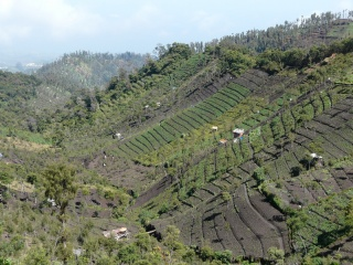 Farming activities can be seen everywhere on the fertile hill slopes on way to Mt. Bromo